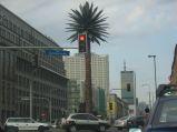 Palma w Warszawie na rondzie Charlesa De Gaullea