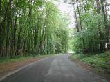 Podjazd na górkę w lesie