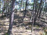 Górka w lesie przy wejściu na plaże nr. 36