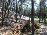 Górka w lesie w Ostrowie