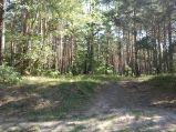 Las przy wieździe do Loretto