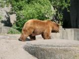 Wybieg niedźwiedzi w Warszawskim ZOO