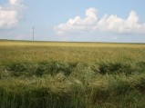 Pola, widok na Górę Kumowską