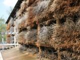 Ściana tężni w Konstancinie-Jeziornej