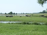 Woda z rzeki Mogilanki rozlana po polach