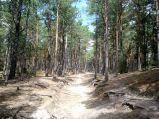 Ścieżka przez las do latarni Stilo