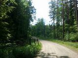 Leśna droga w okolicy Mechowa