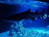 Rekin w całej okazałości