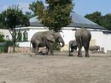 Warszawskie ZOO, wybieg słoni