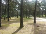 Parking w lesie w Lubiatowie