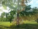 Przydrożny krzyż w Ossie