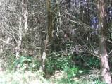 Drzewa i zarośla przy szlak czerwonym na Spławy
