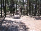 Przyjście przez las do plaży w Karwi