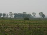 Żuraw na polu w okolicy Osiek Lęborskich