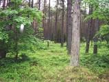 Las przy drodze do Lubiatowa
