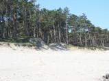 Las przy plaży w Ostrowie