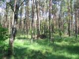 Las w okolicy Osówki