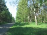 Las przy drodze do Osówki