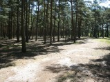 Miejsce obozu harcerskiego z Koła w Lubiatowie