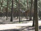 Brama oboz harcerskiego z Koła w Lubiatowie