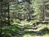 Droga w lesie miezdy wejsciem 39 i 39 przy plaży w Lubiatowie