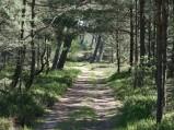 Droga w lesie przy plaży w Lubiatowie