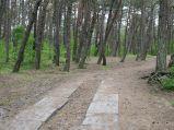 Ścieżka przez las, środkowy odcinek do plaży w Dębkach