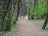 Ścieżka przez las do plaży w Dębkach, środek lasu