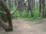 Ścieżka przez las do plaży