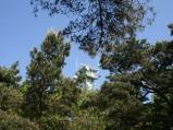 Wieża obserwcyjna widziana z deptaku