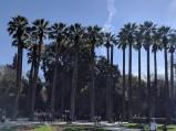 Palmy w Ogrodzie Narodowym w Attenach