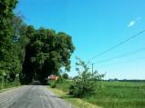 Pomnik przyrody, Aleja Drzew, Brzemiona