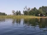 Trzciny przy kąpielisku przy Ośrodku  na Jeziorze Rotcze