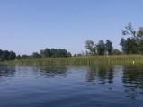 Trzciny przy kąpielisku jeziora Grabniak