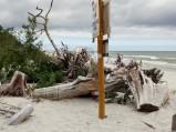 Korzenie przy wejściu na plażę, Karwieńskie Błoto II
