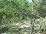 Widok z wydmy, trochę widać jaka jest wysoka