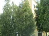 Kościół w Lubichowie
