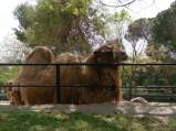 Wybieg wielbłądów, Zoo Madryt