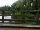 Rzeka Wieprz w Milejowie