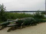 Krokodyl przy plaży głównej w Okunince