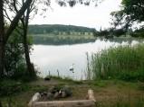 Łabędź, Jezioro Tyrsko, Olsztyn