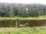 Stare koryto Bugu w Orchówku