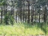 Za laskiem jezioro w Płocicznie
