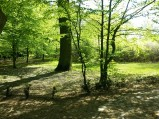Park, dwór, Sułkowice Pierwsze