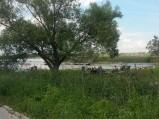 Pomost, Jezioro Sumin