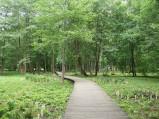 Kładki pomiędzy roślinnością parku w Wejherowie